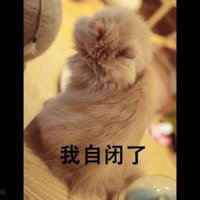 https://p3-bcy.byteimg.com/img/banciyuan/user/2232619/item/c0jxb/8b809931914249e4ae8dff68b191d0af.png~tplv-banciyuan-2X2.jpg
